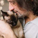 gatos curan depresion